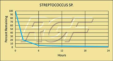 Streptococcus-Sp