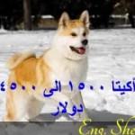 أغلى أنواع الكلاب فى العالم مع أسمائها وأثمانها