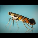 These Tiny, Stunning Moths Are Only Found in One Place on Earth | National Geographic