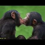 أسرار محرجة تخفيها الحيوانات عن البشر !