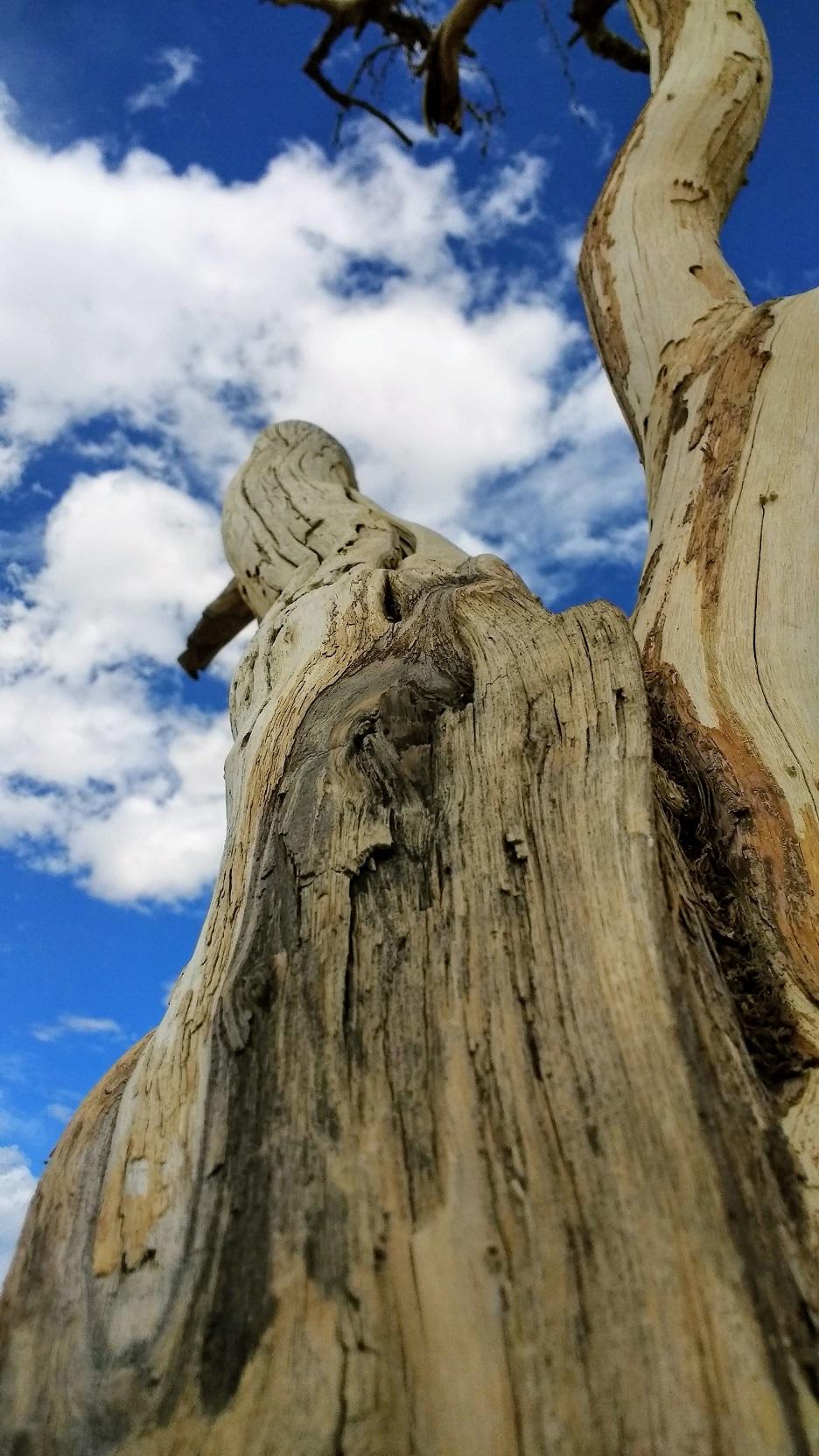 Furnace Creek Tree