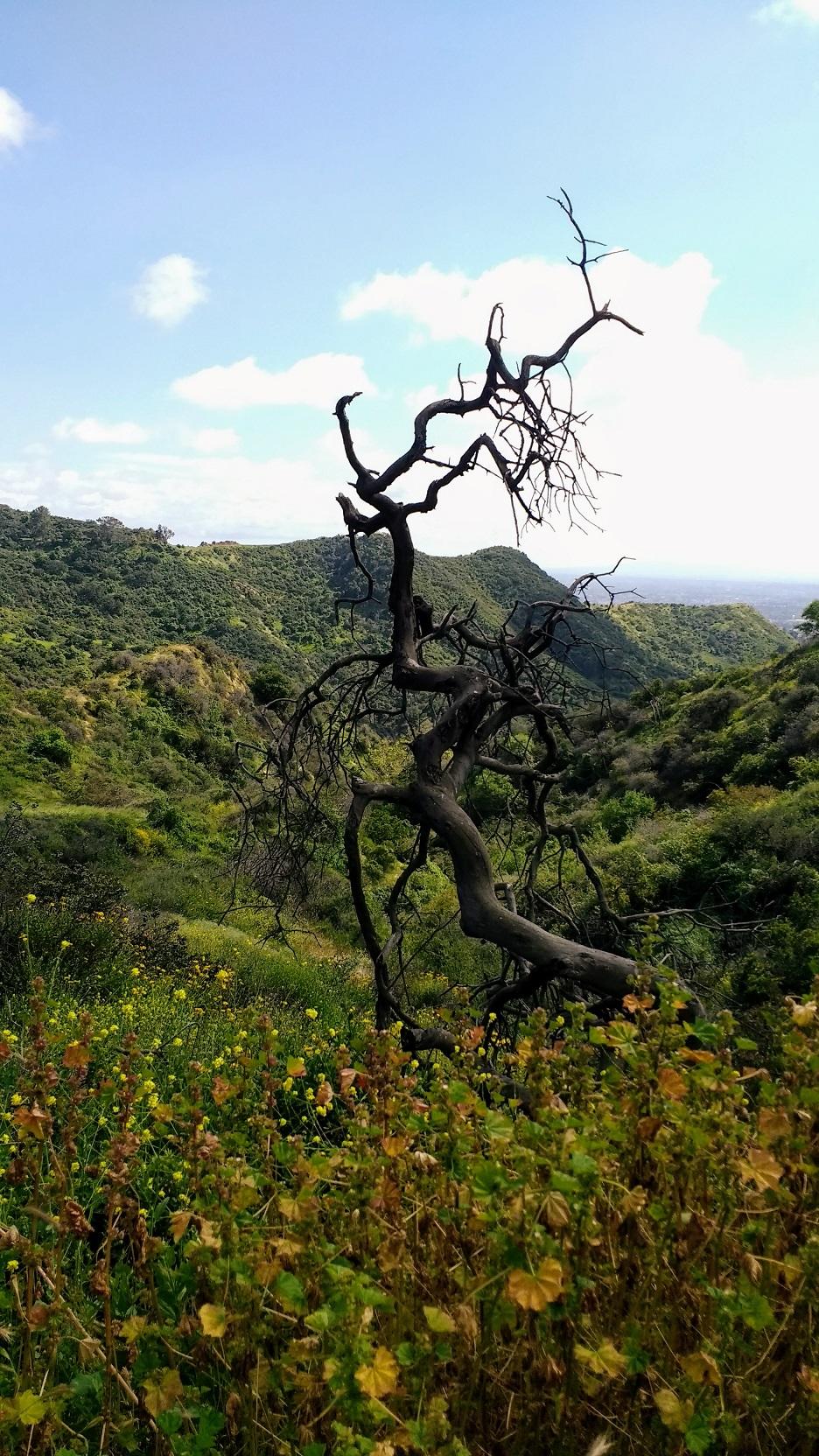 Dead Tree Hollywood Hike