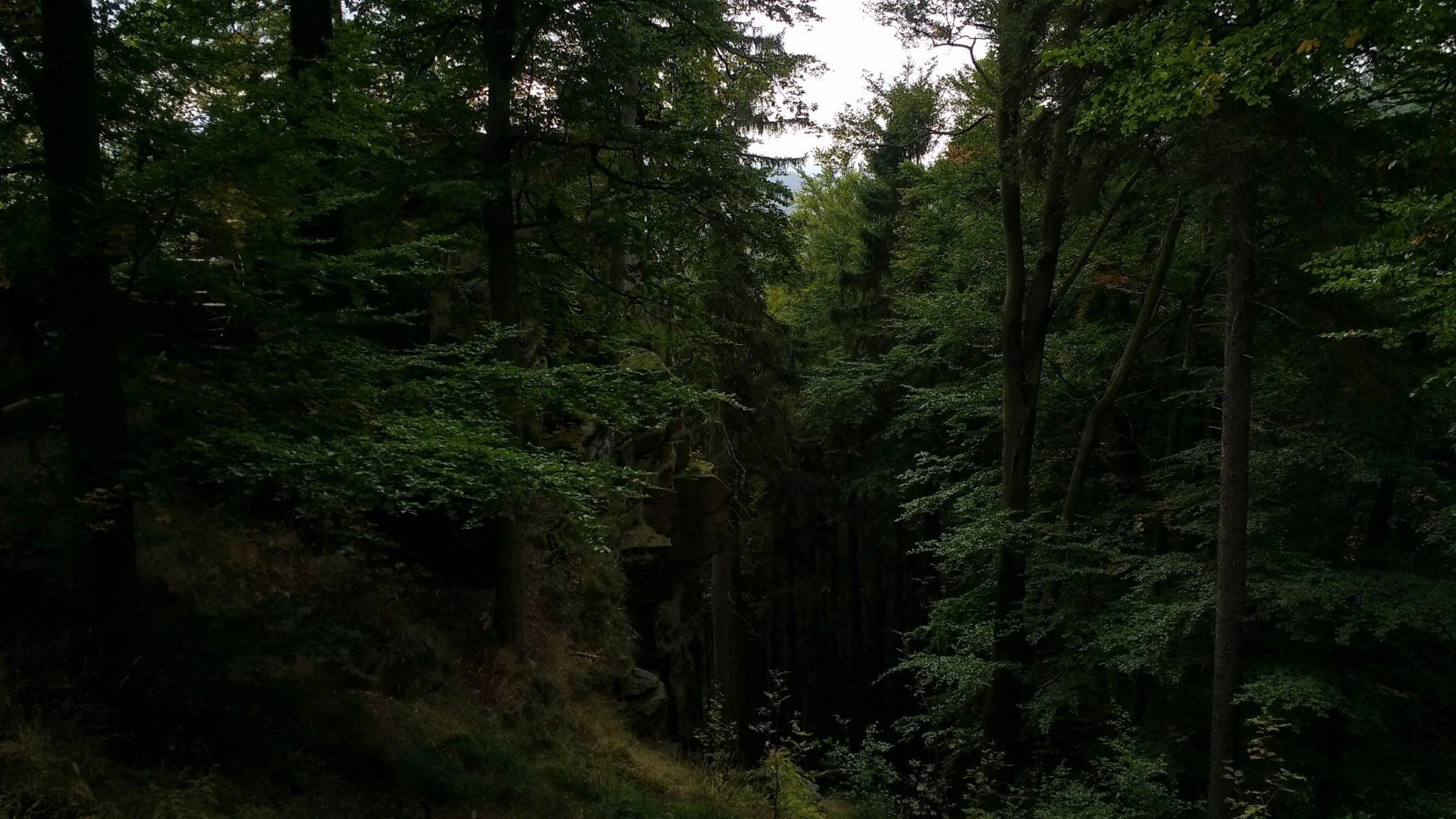 dark forest hike