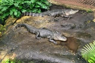 Leipzig Zoo gators