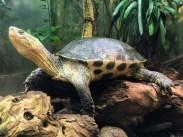 Leipzig Zoo turtle