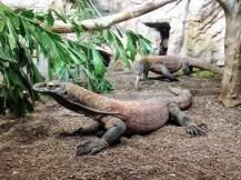 Leipzig Zoo komodo dragons