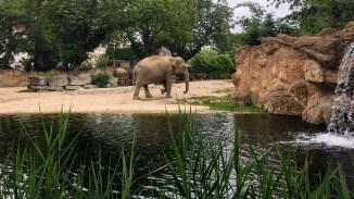Leipzig Zoo elephant