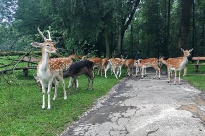 Düsseldorf tierpark deer