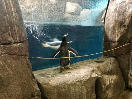 penguin Tierpark Hagenbeck