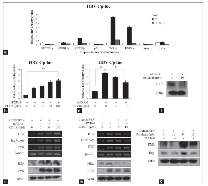 Sorafenib suppresses hepatitis B virus gene expression via