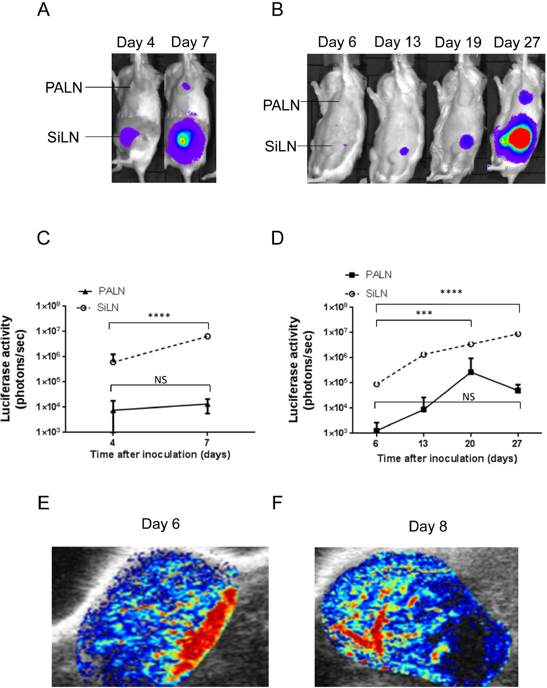hight resolution of induction of metastasis of km luc gfp cells or fm3a luc cells to the proper axillary lymph node paln after inoculation of the cells into the subiliac