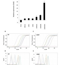 application of pcr array to cisplatin cddp treated hela cells difference in transcriptional activity of cisplatin treated hela cells  [ 1076 x 1344 Pixel ]