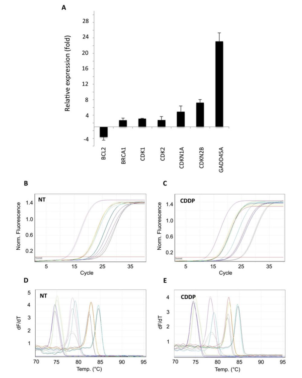 medium resolution of application of pcr array to cisplatin cddp treated hela cells difference in transcriptional activity of cisplatin treated hela cells