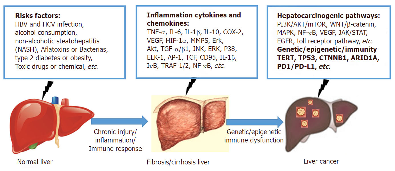 hight resolution of the risk factors inflammation cytokines and chemokines and hepatocarcinogenic pathways are related to the inflammation cancer transformation during the