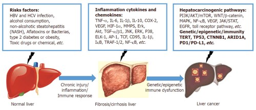 small resolution of the risk factors inflammation cytokines and chemokines and hepatocarcinogenic pathways are related to the inflammation cancer transformation during the