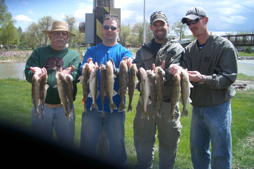 I took Rick and his sons out fishing between Fort Pierre bridge and the bluffs and what a great day we had catching walleye