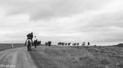 ระหว่างทาง ประเทศนี้ม้าครองถนนเลย