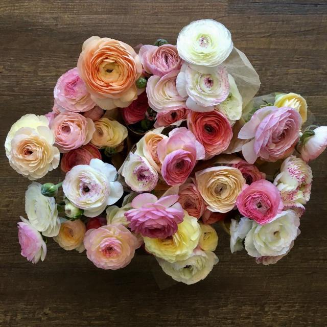 These candy coloured locally grown ranunculus are on special thishellip