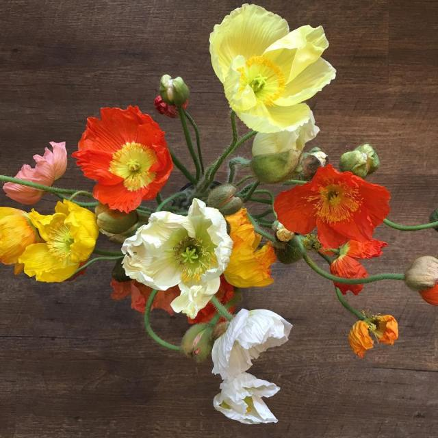 These poppies should brighten up your dreary first day ofhellip
