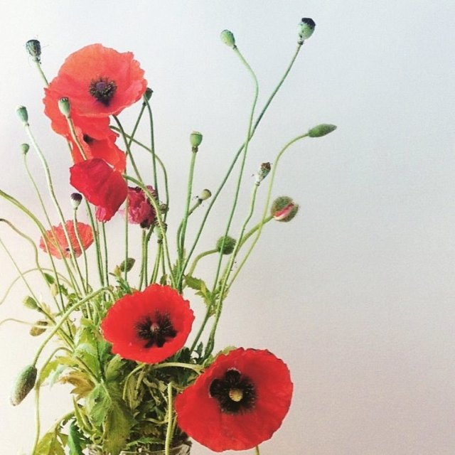 The shop is closed today in observance of Remembrance Dayhellip