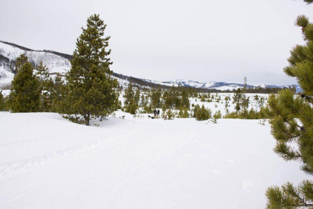 Dog Sledding at Snow Mountain Ranch
