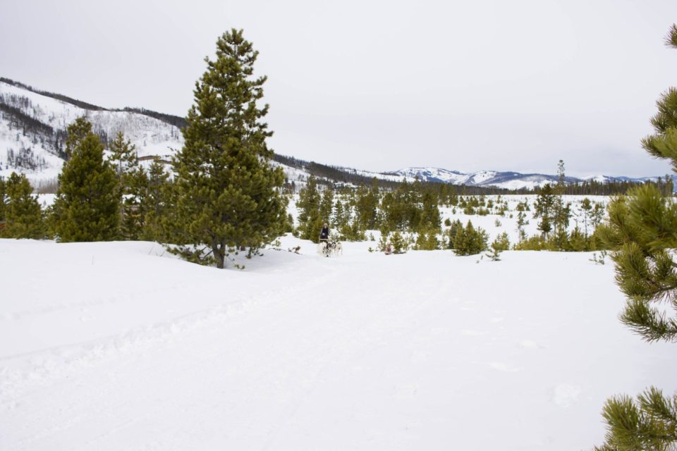Dog Sledding at Snow Mountain Ranch