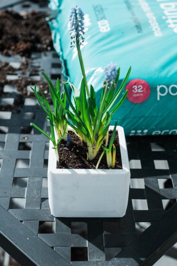 Indoor Spring Planting