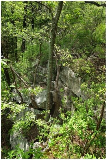 Rock Bluff