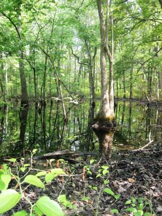 wetland at Oak Bluff