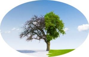 Transformation, Oak Consult