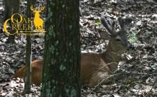 Oak Creek monster buck