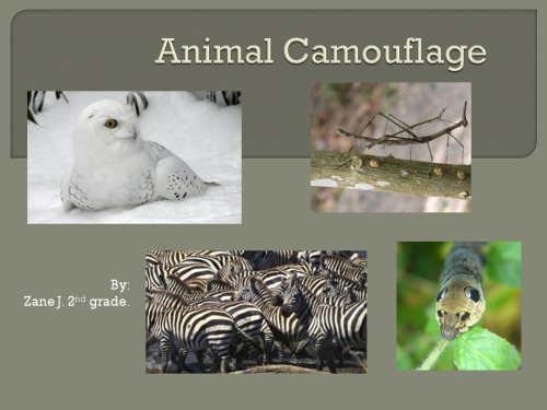 Animal Camouflage K 5 Computer Lab Technology Lessons