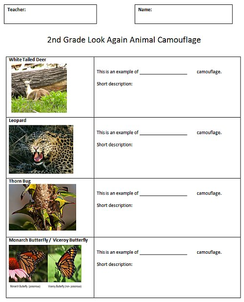 Animal Camouflage Comic K 5 Computer Lab Technology Lessons