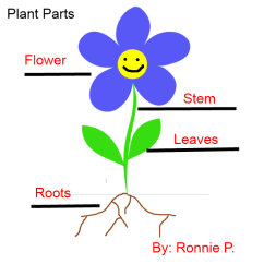 Diagram Of A Flowering Plant With Label Ez Loader Wiring Labeling Flowers Stems Leaves And Roots K 5 Computer Lab Labeled Parts