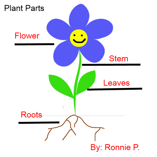 flower parts diagram without labels simplex addressable fire alarm system wiring labeling flowers stems leaves and roots k 5 computer lab labeled plant