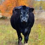 February 2 – Nature & Farm Photo Contest