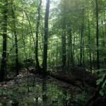 Tribbett Woods