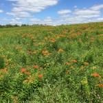 Monarch Meadows
