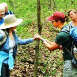 April 10 – Wildflower Walks at Sunman's Woods