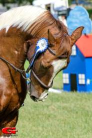 Equestrian-01