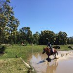 Equestrian-Veda-and-Phoenix