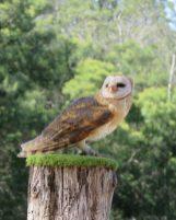 Owl Encounters 3
