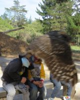 Owl Encounters 4