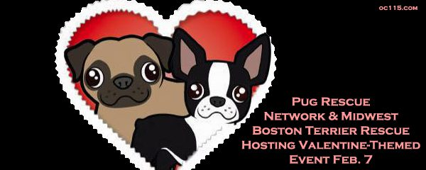 pug terrier rescues hosting