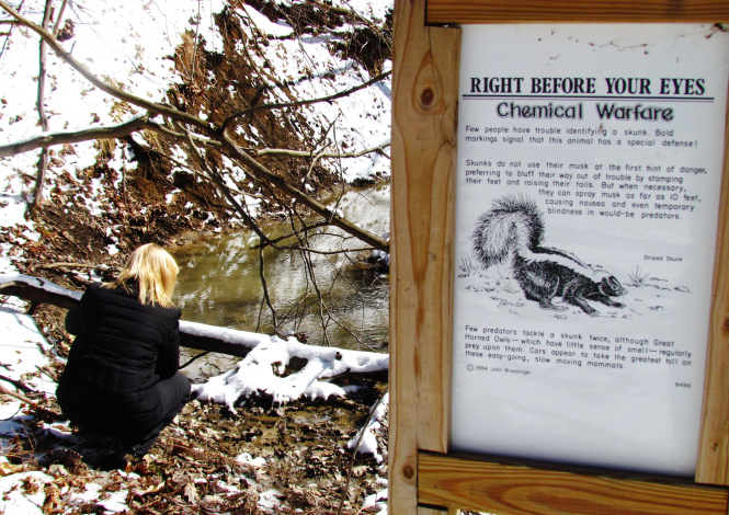 Skunks often meander near creeks in the waning days of winter. This interpretive sign is at the Hawk Woods Nature Center in Auburn Hills.