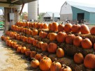 Pumpkins ready to be dressed up for Fall.