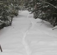Deep snow deer trail
