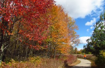 A cement path at Independence Oaks County Park winds around a group of trees displaying leaves with fall colors of red, orange and yellow. The sky is bright blue with puffy white clouds.