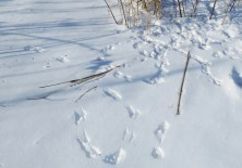 songbird-tracks