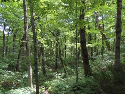 baneberry habitat